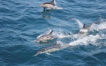Gibraltar: Dolphin Safari Private Charter