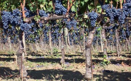 Bologna Full-Day Wine Tour