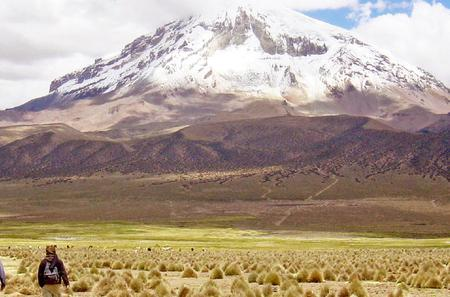 Sajama National Park Full-Day Tour from La Paz