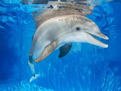 Clearwater Marine Aquarium with Winters Dolphin Tale Adventure Admission Ticket