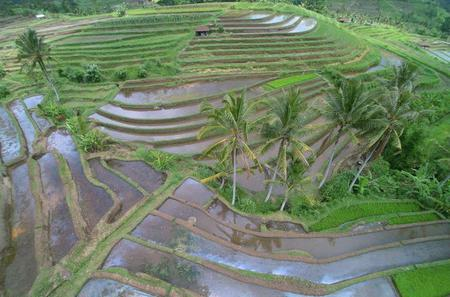 Private Tour: Discover Northern Bali Day Tour
