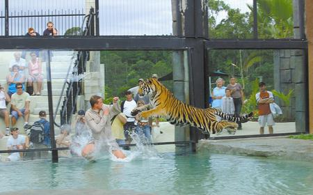Australia Zoo Full-Day Day Tour from Brisbane & Gold Coast