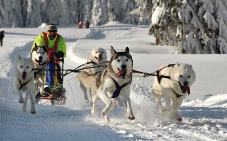 Krakow: Full-Day Private Dog Sled Ride