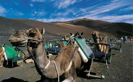 Lanzarote: Southern Tour for cruise passengers