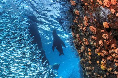 Snorkel with Sea Lions at Espiritu Santo Island