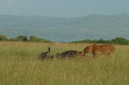 7 Night Safari: Murchison Falls, Kibale Forest, Queen Elizabeth Lake and Mburo