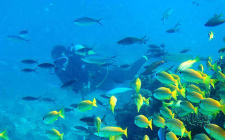 PADI Scuba Diving in Grand Bay: Introductory Course