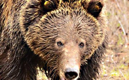 Grand Teton Morning Wildlife Safari Adventure