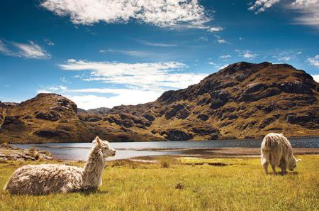 Private Tour to Cajas National Park Including Cloud Forest Hike