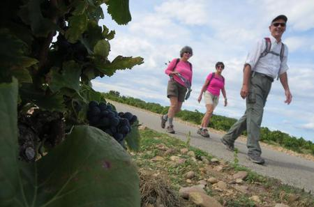 Private Guided Walking Tour Through the Vines of Chateauneuf du Pape from Avignon