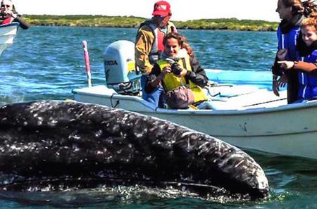 2-Day Tour: Intimate Gray Whale Watching Experience in Magdalena Bay