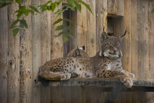 Bucharest Zoo