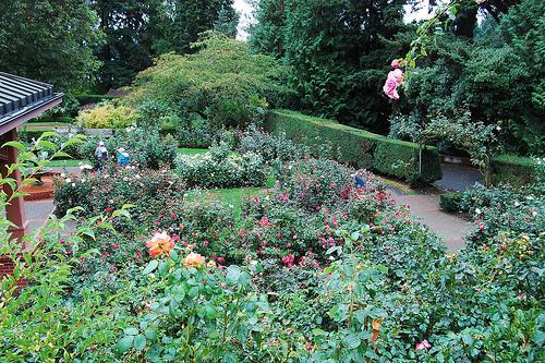 International Rose Test Gardens