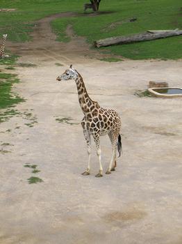 Zoo Praha