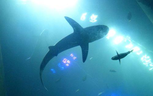 Sea Life Munchen