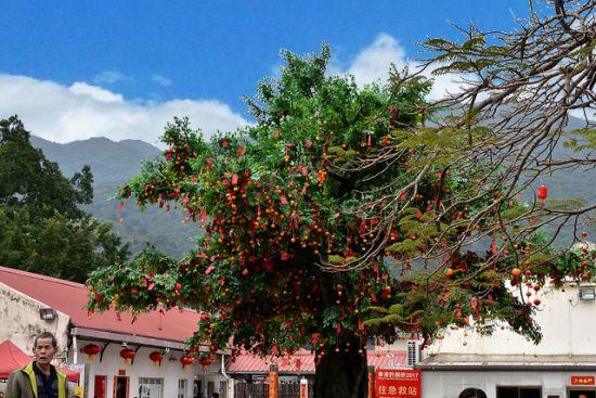 Lam Tsuen Wishing Tree