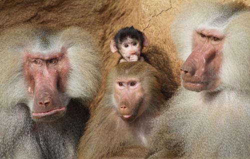 Cologne Zoological Garden