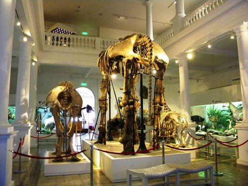 Grigore Antipa Natural History National Museum
