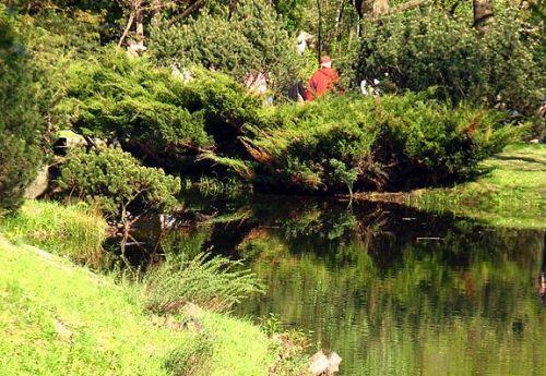 Japanese garden in Botanichesky Sad