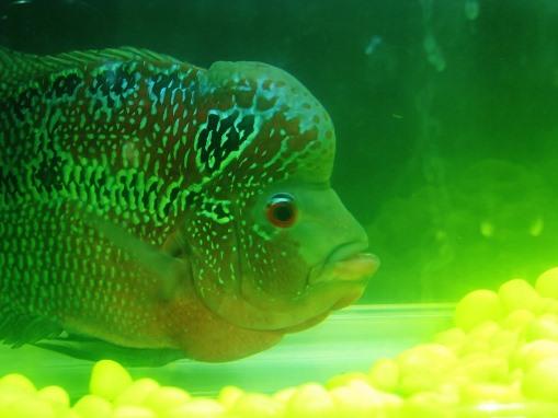 Samut Sakhon Marine Aquarium