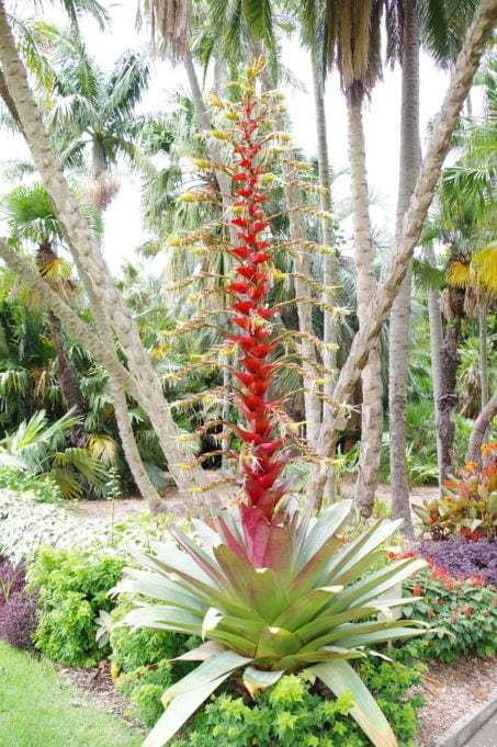 Sydney Royal Botanic Garden