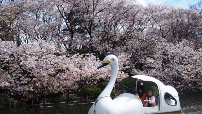 Parc d'Inokashira
