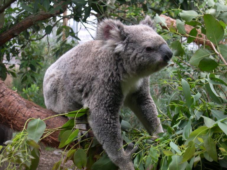 Wild Life de Sydney