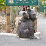Lone Pine Koala Sanctuary
