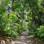 City Botanic Gardens 2019