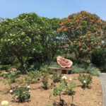 Mont Coot-tha Botanic Garden