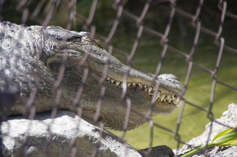 Zoo de Los Angeles