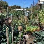 Veg Out Community Gardens