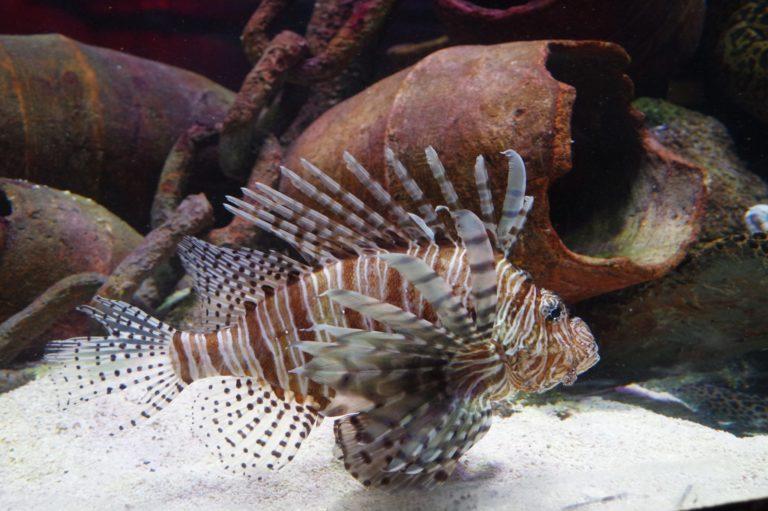 Aquarium de Melbourne