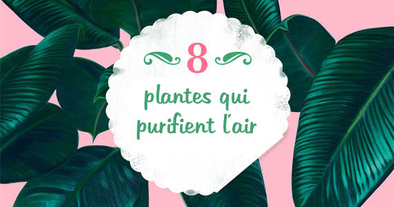 meilleures plantes de maison pour purifier l'air