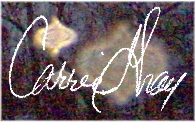 Carrie Gray's Signature