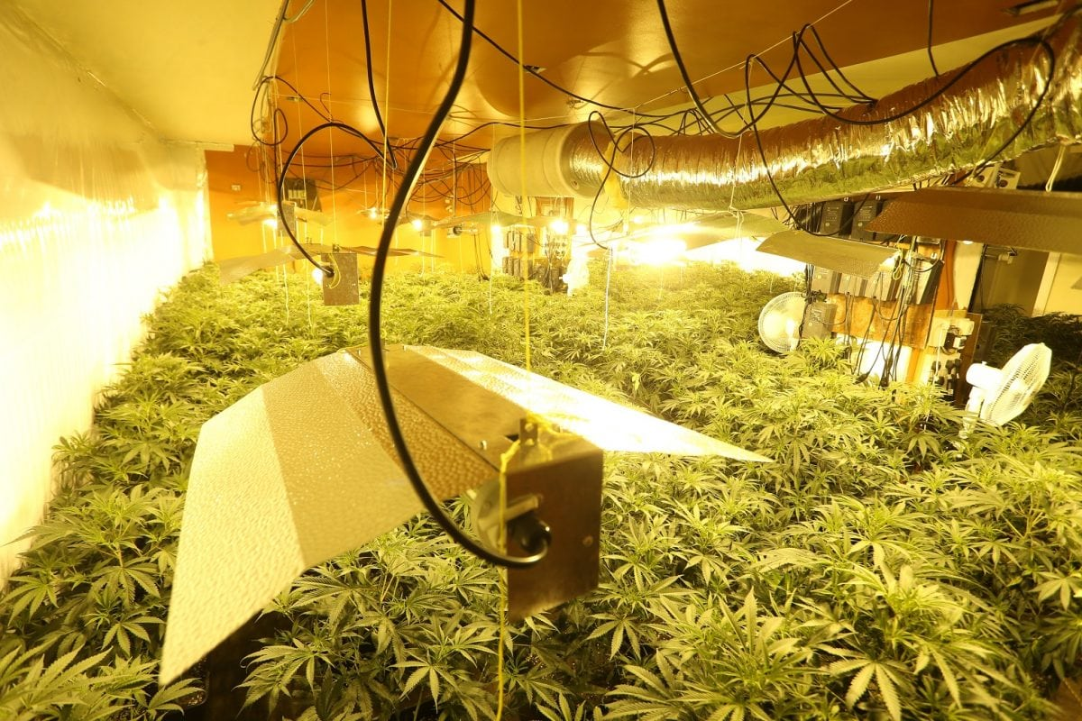 The cannabis farm discovered in Brinsley.  Cannabis plants with a street value of half a million pounds have been found inside a disused restaurant.  See NTI story NTIWEED.  Residents living near the former Farm House Restaurant in Brinsley - which has been disused for more than a year - had believed it was being renovated, with workers boarding up the site around two months ago.  But after Nottinghamshire Police were alerted about excessive electricity use from the property by Western Power Distribution, officers kicked down the doors of the Cordy Lane site on Wednesday morning to find more than 1,000 cannabis plants growing inside.  The plants were being grown through some 10 rooms spread over two floors.