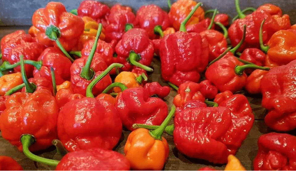 Chili Pepper Consumption Reduces Risk for Death After Heart Attack or Stroke
