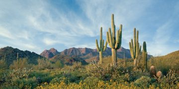 McDowell Mountain Preserve Scottsdale, Arizona