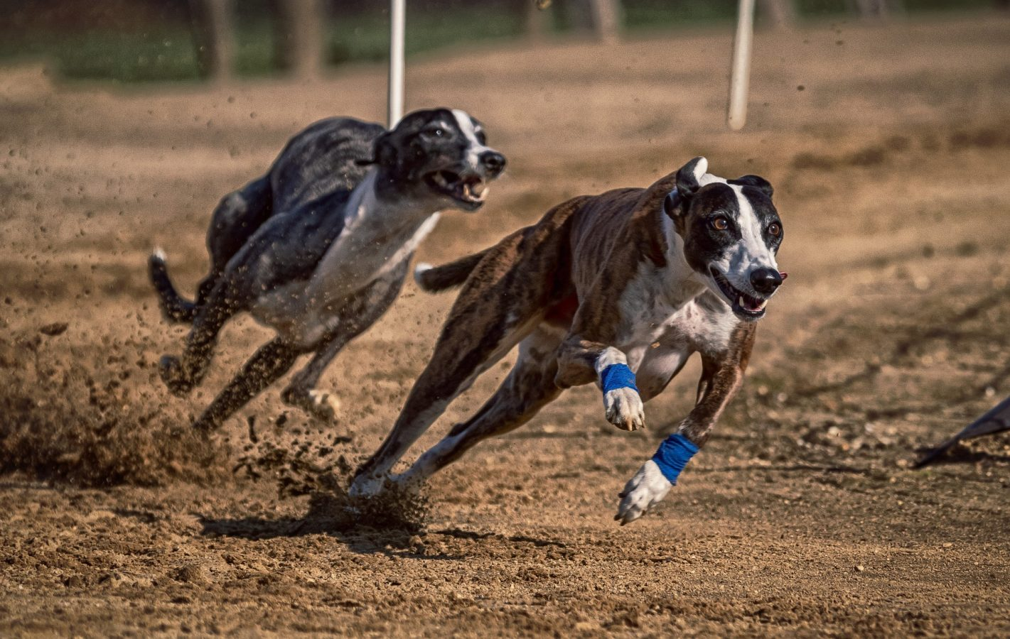 Romford dogs betting on sports green betting