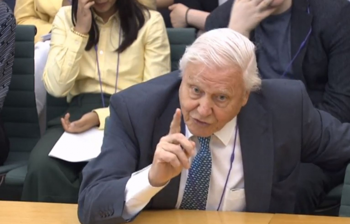 Naturalist Sir David Attenborough giving evidence to the House of Commons Business, Energy and Industrial Strategy Committee,