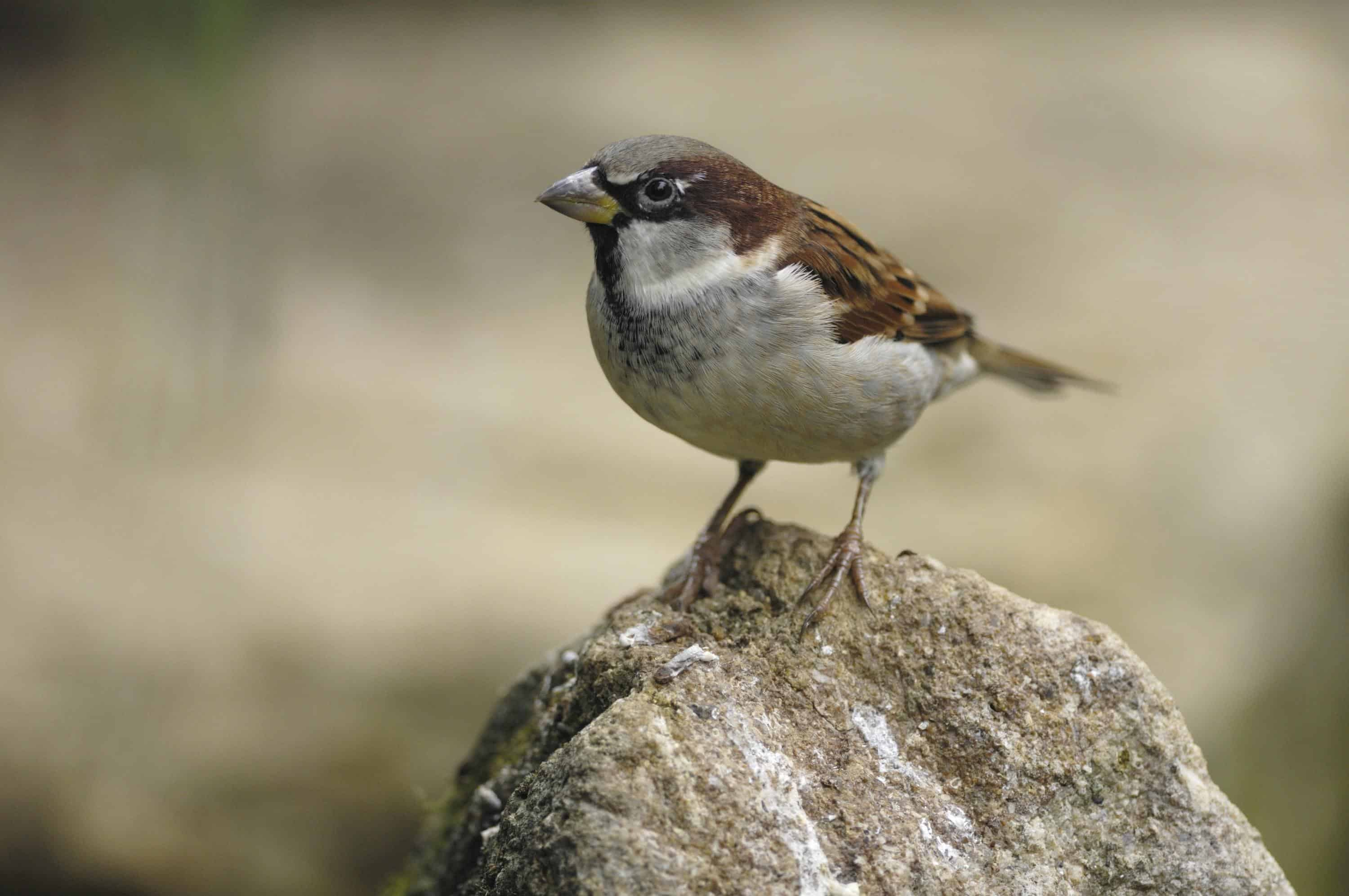 Birds are getting smaller, study finds