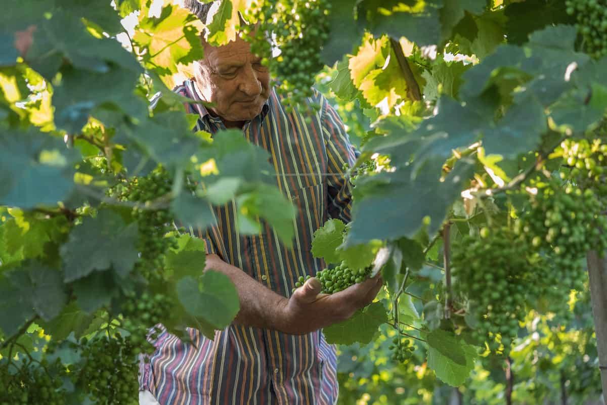 La Jara Prosecco vines Veneto