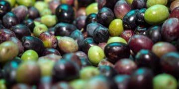 Olive Oil Cordoba