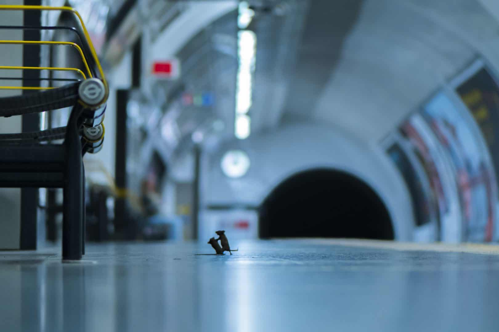 Mice 'squabbling' on Tube station platform win wildlife