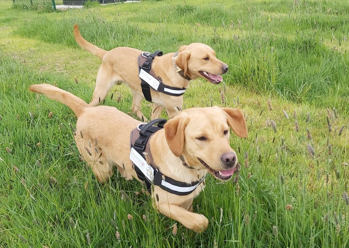 Environet's Detection Dogs - TLE Property
