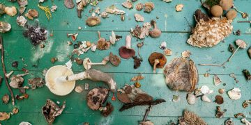 In search of Mycotopia Some of the mushrooms discovered by attendants of MycoFest in the summer of 2019 , near Harrisburg, PA. | Photo by Doug Bierend
