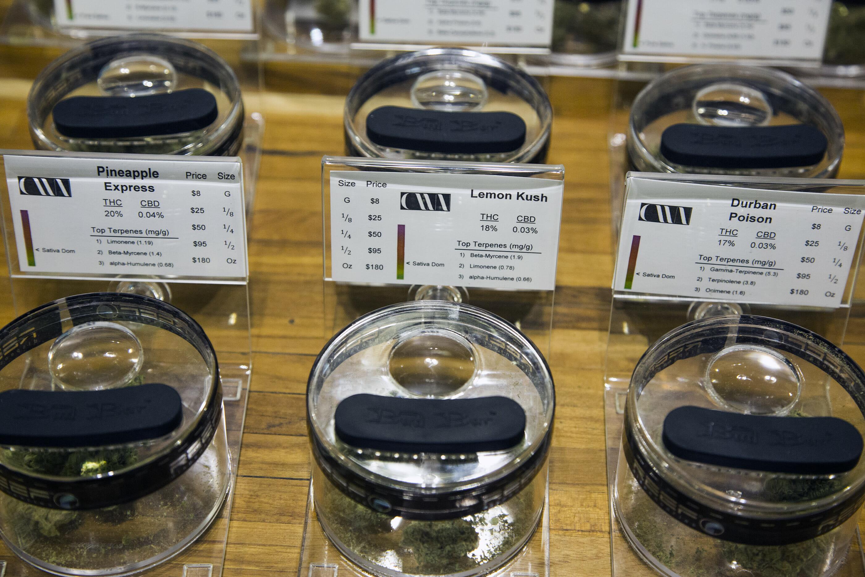 Cannabis strains on display