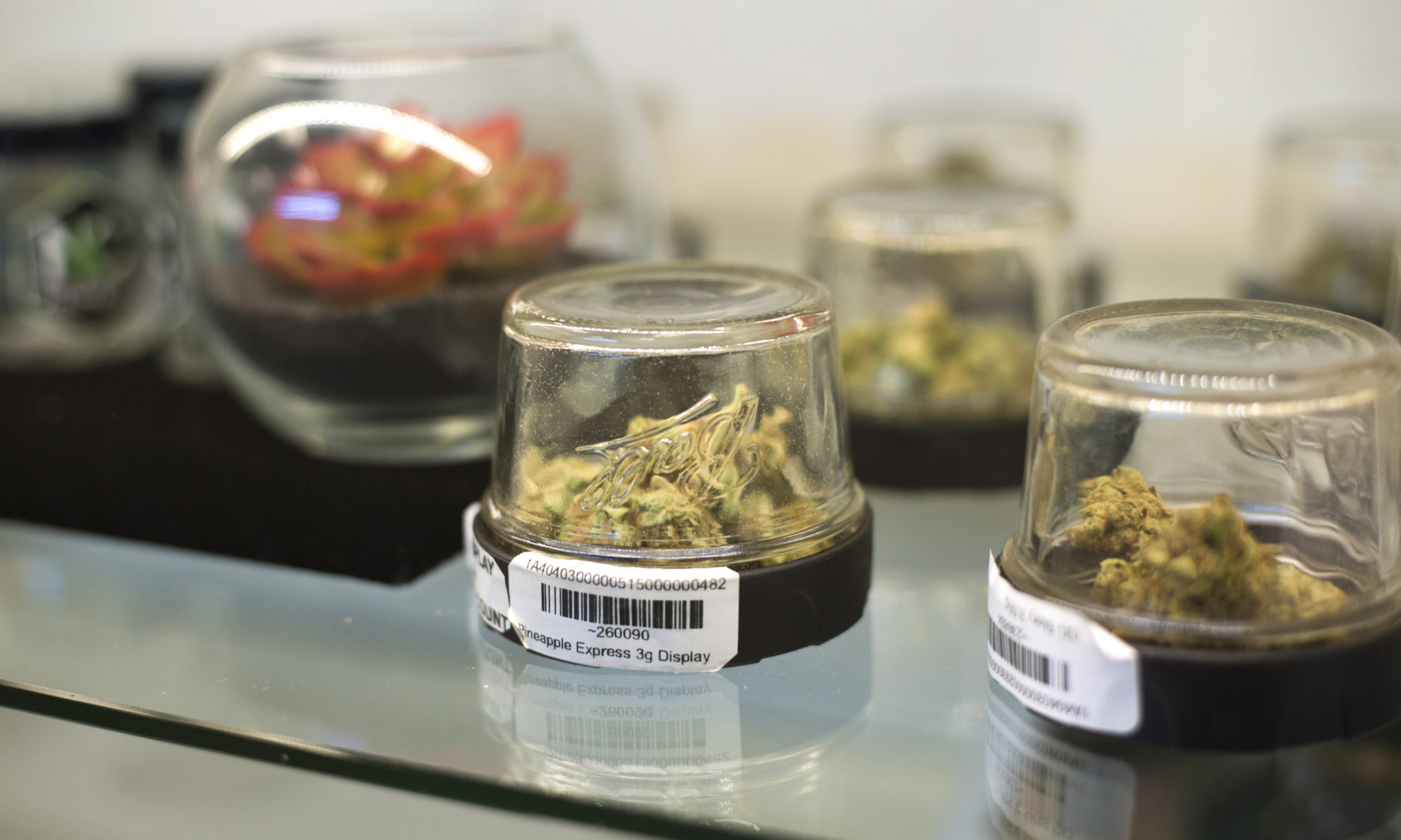 Marijuana displayed inside Inyo Fine Cannabis Dispensary