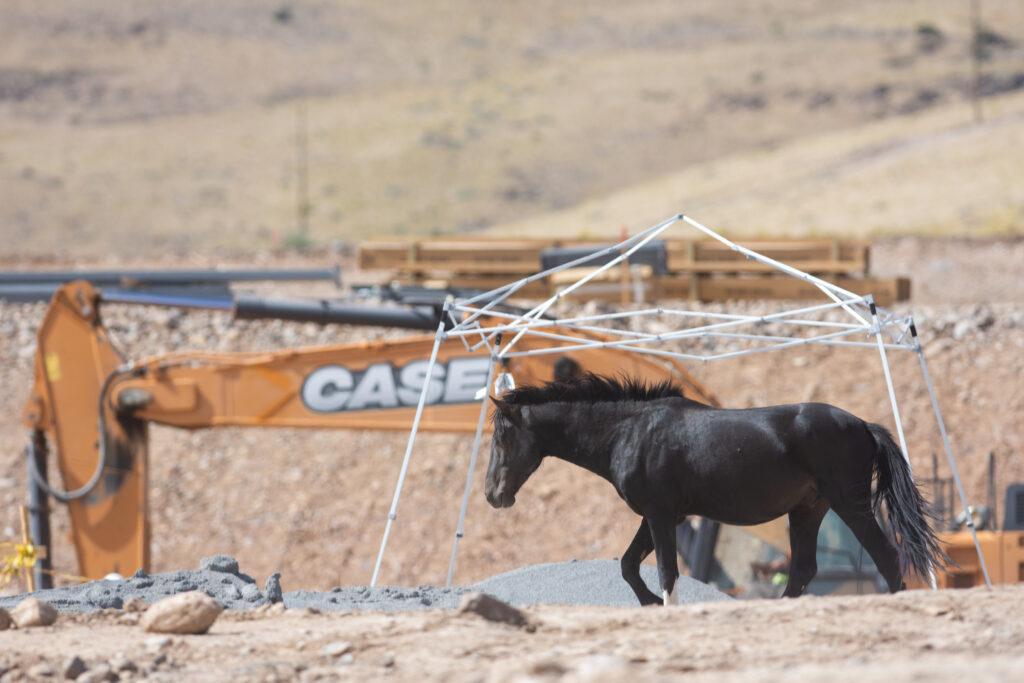 Horses at Tahoe Reno Industrial Center