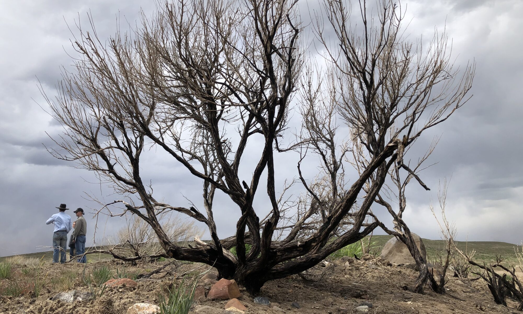 Indy Environment: Fire restoration in the Great Basin, fluid water bills and plutonium accountability